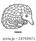 Coloring book for children, Pangolin 28769971