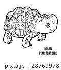 Coloring book, Indian star tortoise 28769978