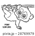 Coloring book, Pygmy slow loris 28769979