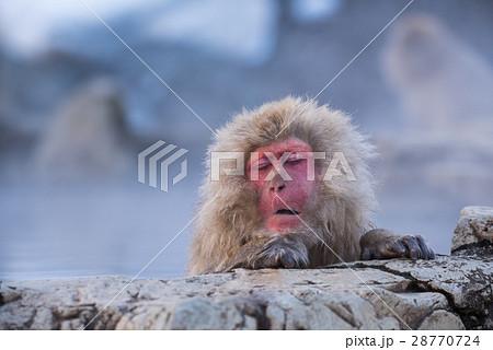 地獄谷野猿公苑のスノーモンキー 28770724