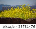 菜の花の風景志摩スペイン村01 28781476