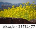 菜の花の風景志摩スペイン村02 28781477