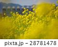 菜の花の風景志摩スペイン村03 28781478