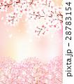 桜 桜の花 春のイラスト 28783154
