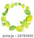 フレーム 若葉 新緑のイラスト 28783600