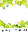 フレーム 若葉 新緑のイラスト 28783601