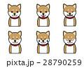 犬の表情(笑う、怒る、吠える) 28790259
