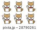 犬の表情(笑う、笑顔、質問、回答) 28790261
