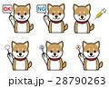 犬の表情(質問、回答、注射) 28790263
