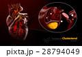 ハート ハートマーク 心臓のイラスト 28794049