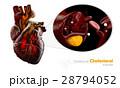 ハート ハートマーク 心臓のイラスト 28794052