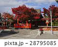 11月 紅葉の車折(くるまざき)神社 京都の秋景色 28795085