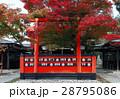 11月 紅葉の車折(くるまざき)神社 京都の秋景色 28795086