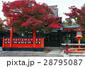 11月 紅葉の車折(くるまざき)神社 京都の秋景色 28795087