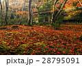 11月  嵯峨野の祇王寺 京都の秋景色 28795091