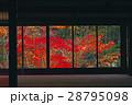 11月 紅葉の天授庵    京都の秋 28795098
