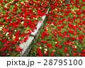11月 紅葉の永観堂 京都の秋景色 28795100