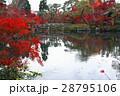 11月 紅葉の永観堂 京都の秋景色 28795106