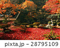 11月 紅葉の徳源院 近江の秋景色 28795109