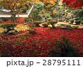 11月 紅葉の徳源院 近江の秋景色 28795111