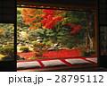 11月 紅葉の徳源院 近江の秋景色 28795112