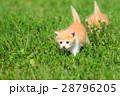 子猫の兄弟♪ 28796205