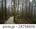 林 森 樹林の写真 28798606