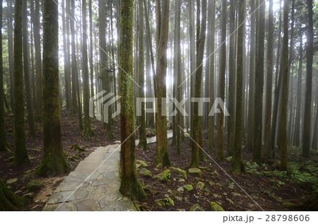 林 森 樹林 28798606