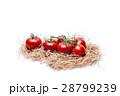 トマト 28799239