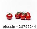 トマト 28799244