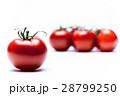 トマト 28799250