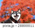 秋だねぇ♪ 28800011