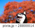 秋だねぇ♪ 28800014