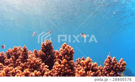 沖縄 阿嘉島のニシハマビーチ 水中撮影 28800576