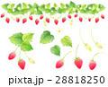 苺 果物 フルーツのイラスト 28818250