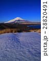 山中湖・鉄砲木ノ頭(明神山)からの雪景色の青空富士山 28820491