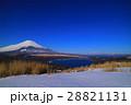 鉄砲木ノ頭(明神山)山頂から山中湖と雪景色の青空富士山 28821131