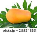 ripe papaya fruit on white background 28824835