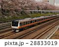 中央線 桜並木 電車の写真 28833019
