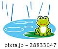 梅雨 カエル 28833047