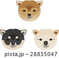犬 柴犬 顔のイラスト 28835047