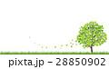 新緑(若葉) 28850902