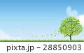 新緑(若葉) 28850903