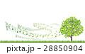 新緑(若葉) 28850904
