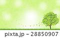 新緑(若葉) 28850907