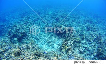 沖縄 阿嘉島のニシハマビーチ 水中撮影 28866968