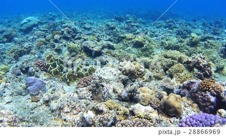 沖縄 阿嘉島のニシハマビーチ 水中撮影 28866969
