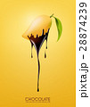 Ripe mango dipped melting dark chocolate, fruit 28874239