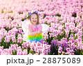 フェアリー 妖精 女の子の写真 28875089