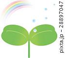 ふた葉 虹 水滴 28897047